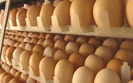 種鶏農場・孵卵場